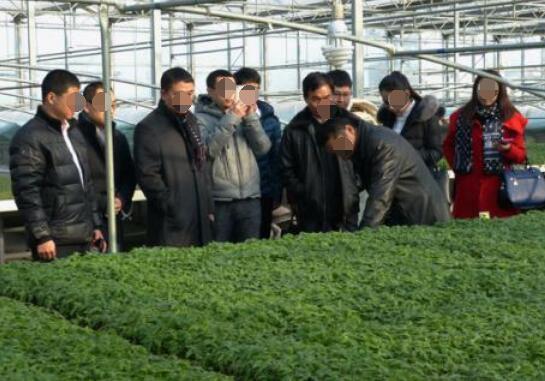 蔬菜苗批发基地,各种蔬菜苗价格