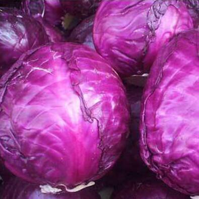紫甘蓝育苗厂 紫甘蓝苗品种